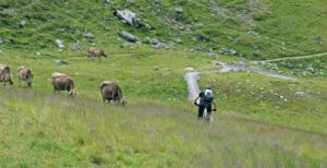 Mountainbike auf einer Alm mit Kühen